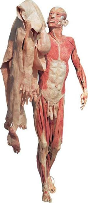 תמונה 1: Gunther von Hagens, The Skin Man, Body Worlds,1997