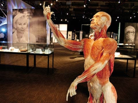 תמונה 4: Gunther von Hagens, Autopsy of Body, Body Worlds, 2003