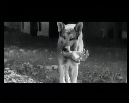 מתוך סרטו של אקירה קורסוואה ״יוג׳ימבו״, 1961